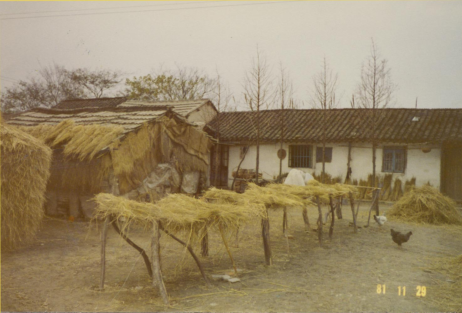 A photo of Dr. James S. C. Chao's village in Jiading County, Shanghai in 1981.
